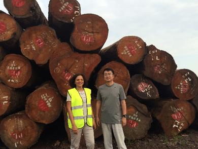 timber-enterprise